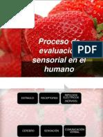 PROCESO DE EVALUACIÓN SENSORIAL