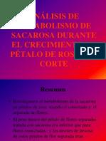 Analisis Del Metabolismo de Sacarosa Durante El Crecimiento de Petalos de Rosas de Corte