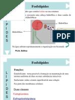 Aula 8 - Lípides.pdf