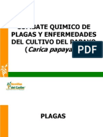 Combate Químico de Plagas y Enfermedades en Papaya