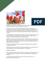 El tulipán.docx