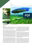 adb08_pg17_29.pdf