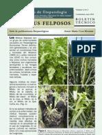 Boletin Mildius Felposos Vol4 n2