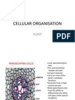 Cellular Organisation in Plant