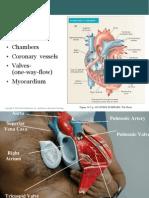 1.Anatomi Jantung