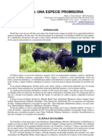 69 Bufalos Peru