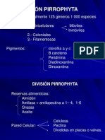 2.- PYRROPHYTA