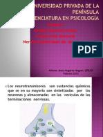 Unidad Neuromuscular