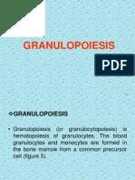 Lecture-Granulopoiesis.pptx