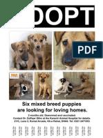 Six Puppy Adoption Flyer