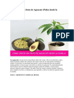 Cómo crecer un fruto de Aguacate.docx