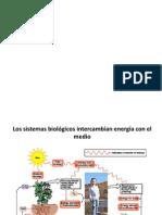 Bioenergética 2 2012 UNAB (1)