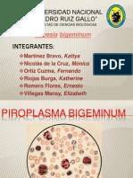 Piroplasma EXPOSICIÓN