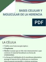 Bases Celular y Molecular de La Herencia