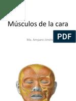 Musculos de Cara