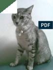 'I am Akhmatova's Cat. Treat me well.'