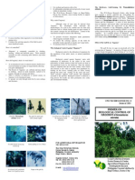 Information Bulletin on Biological Control of Hagonoy / Chromolaena odorata