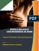 Modelo Biológico carcinogénesis en mama
