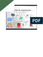 Niveles de Organizacion en Biologia