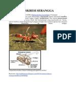 Sistem Ekskresi Serangga