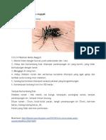 Ciri Ciri Nyamuk Aedes Aegypti