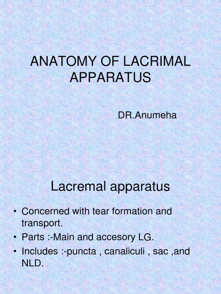 Anatomy of Lacrimal Apparatus | Primate Anatomy | Organ (Anatomy)