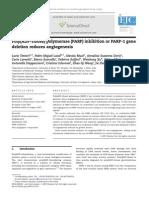 PARP Inhibition or PARP-1 Deletion