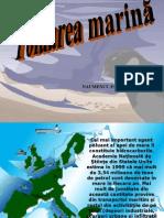 prezentare_poluare_marina.ppt