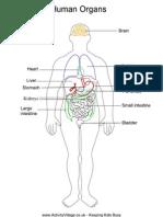 Human Organs Labelled