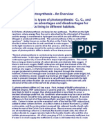Types of Photosynthesis Overview