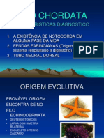 3204865 Biologia PPT Filo Chordata