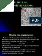 4. Bio celul