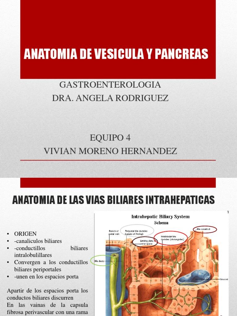 Vesicula y Pancreas Anatomia
