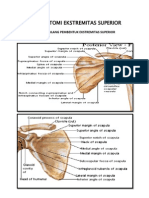 Anatomi Ekstremitas Superior K-1