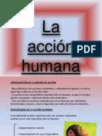 Accion Humana