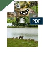 Politica Nacional de Gestion de La Biodiversidad