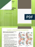 Expo completa Modelos in vitro y cultivos celulares  .pptx
