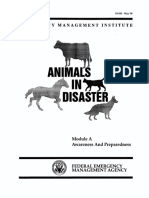 animals in a disaster