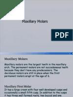 maxillarymolars-100112024419-phpapp01 (1)