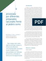 cys23_64-70 Respuesta inmunitaria humoral provocada por diferentes preparados vacunales frente al pedero ovino