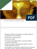 tronco encefálico pares craneales
