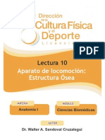 Lect10 Estructura Osea