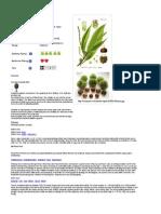καστανια- ελληνικά δέντρα