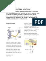 Sistema Nervioso Sintesis