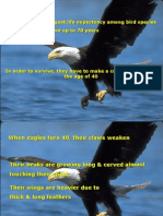 EAGLE (Really nice presentation)