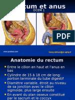 cc rectum et anus