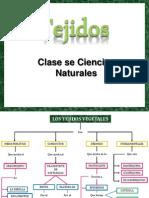 tejidosvegetales-111009103719-phpapp02