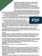 CIENTISTAS COMPROVAM QUE HORTELÃ BRASILEIRA POSSUI EFEITO TERAPÊUTICO