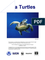 Sea Turtle Booklet