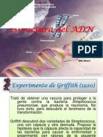 ESTRUCTURA DEL ADN.pptx